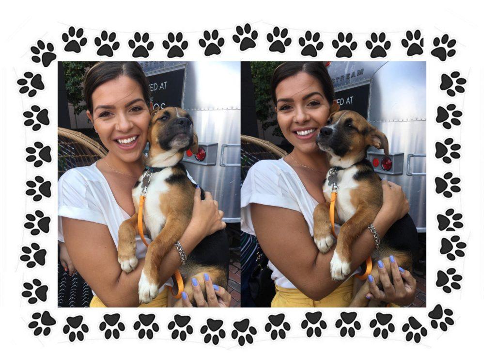 Bella Adopted Puppy
